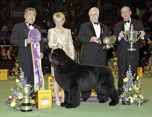 Best In Show Dog Trophy